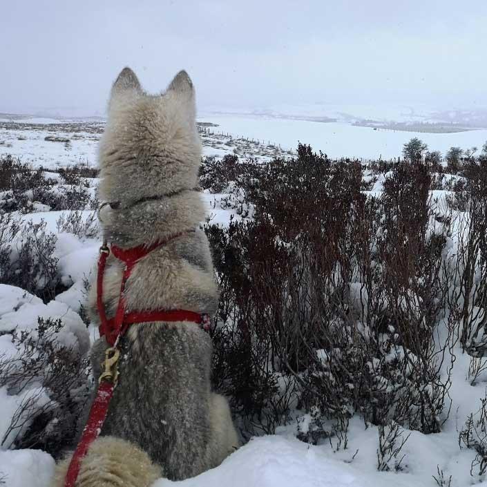 HIKE adventure snow at Mynydd 1