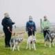 TREK and HIKE - Mynydd Sleddog Adventures