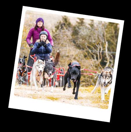 Running the dogs - Mynydd Sleddog Adventures